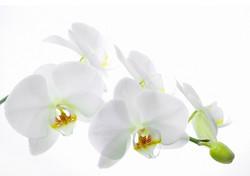 Цветы_089