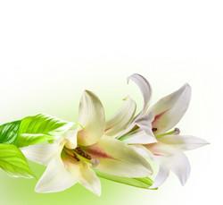 Цветы_085