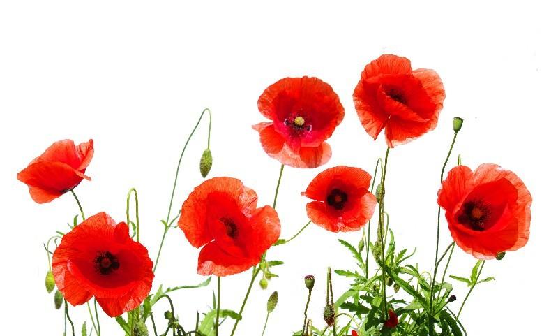 Цветы_133