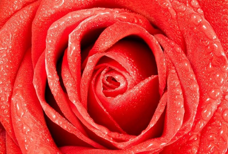 Цветы_070