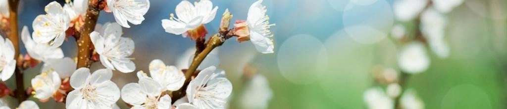 S_цветы_236