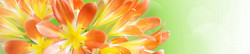 S_цветы_169
