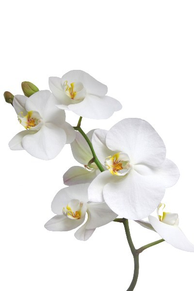 Цветы_068