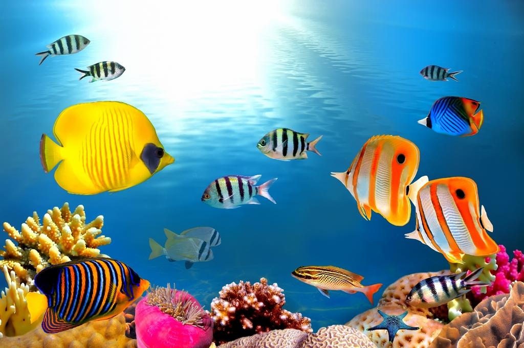 Морская тема_173