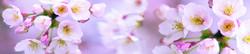 S_цветы_090