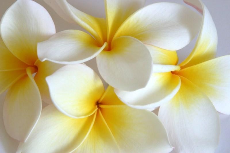Цветы_185