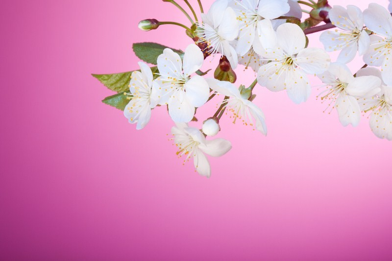 Цветы_169