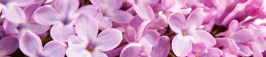 S_цветы_223