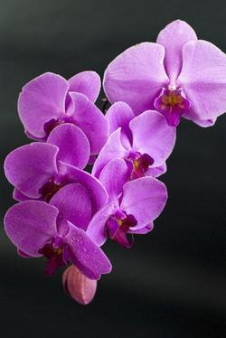Цветы_176