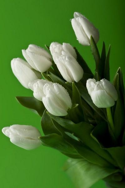 Цветы_205