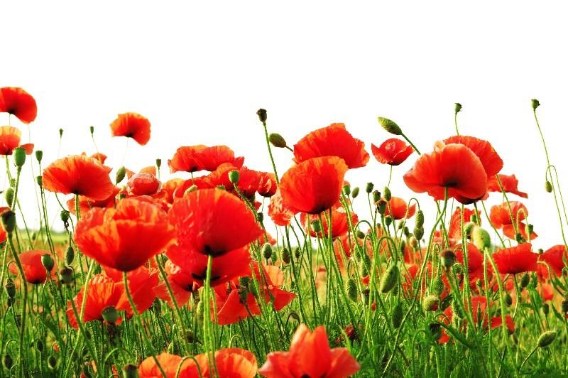 Цветы_233