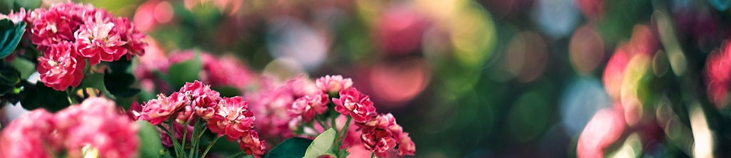 S_цветы_062