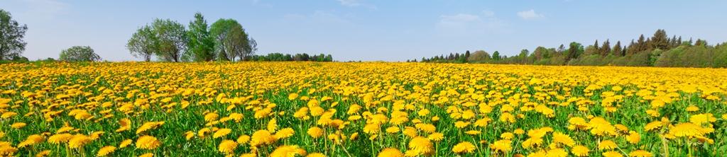 S_цветы_136