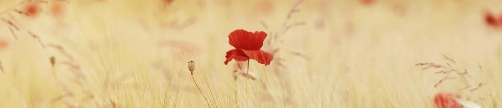 S_цветы_053