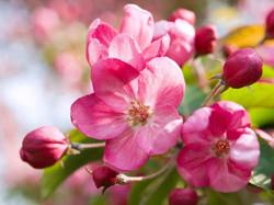 Цветы_098