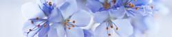S_цветы_021