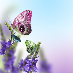Цветы_157
