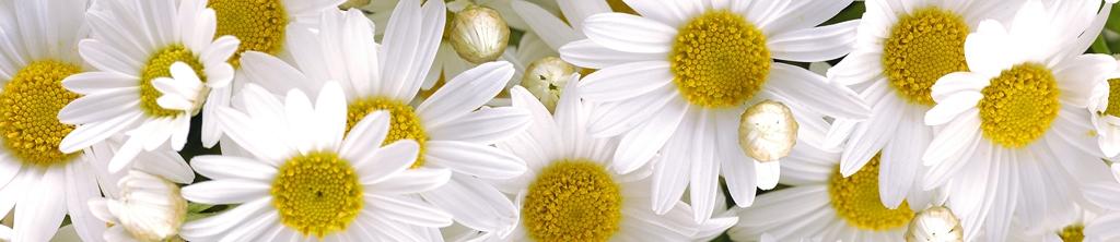 S_цветы_207