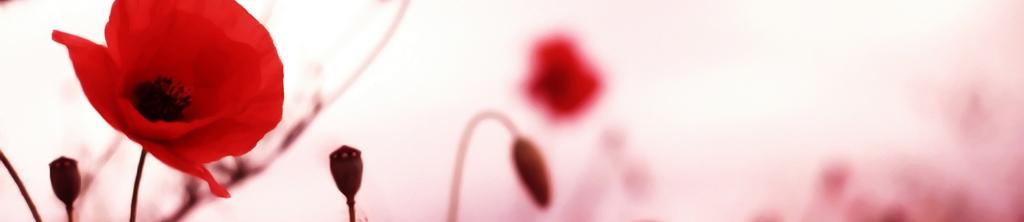 S_цветы_031