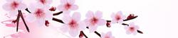 S_цветы_274