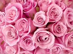 Цветы_005