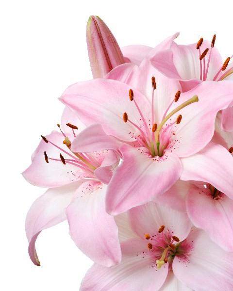Цветы_113