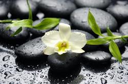 Цветы_245