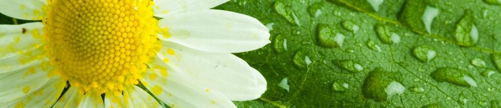 S_цветы_107