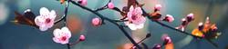 S_цветы_102