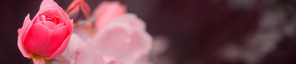 S_цветы_309