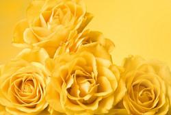 Цветы_028