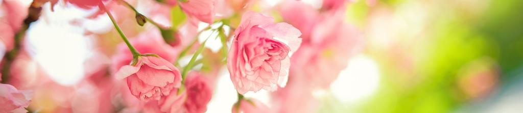 S_цветы_025