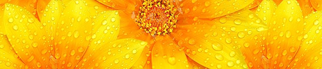 S_цветы_227