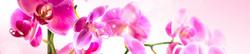 S_цветы_253