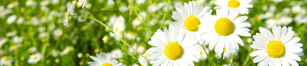 S_цветы_245
