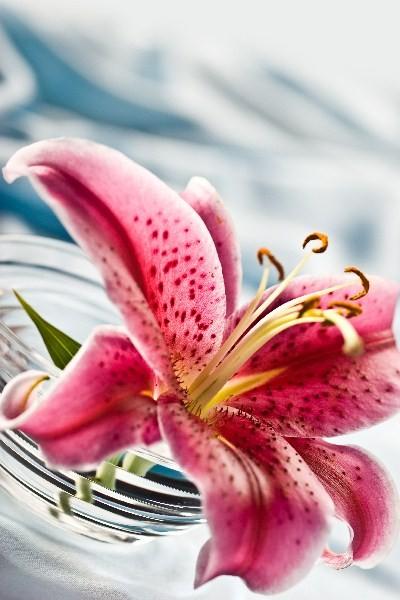 Цветы_022