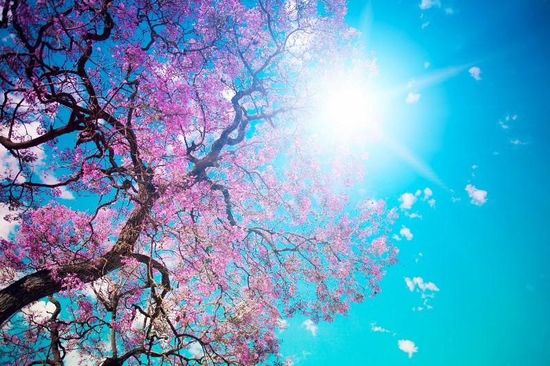Цветы_135