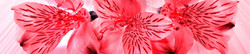 S_цветы_276
