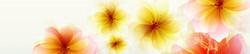 S_цветы_239