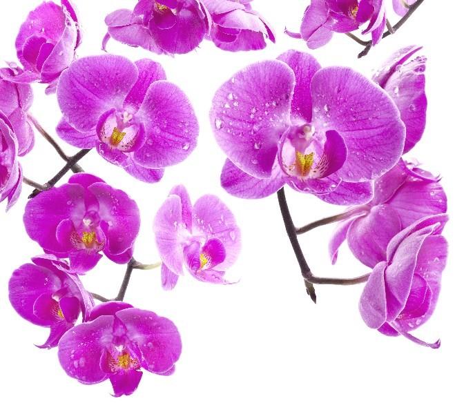 Цветы_184