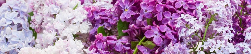 S_цветы_172