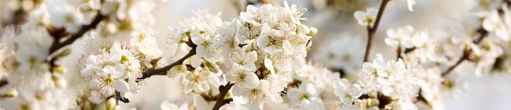 S_цветы_075