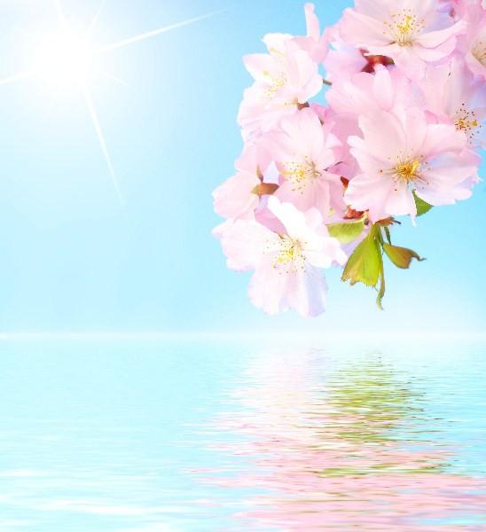 Цветы_207