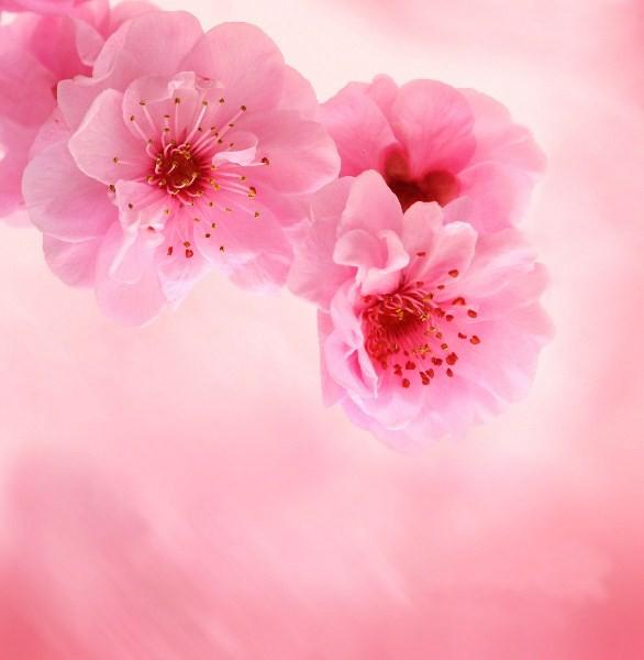 Цветы_039