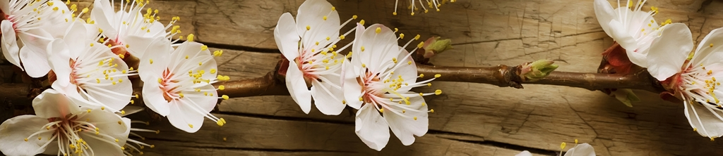 S_цветы_077