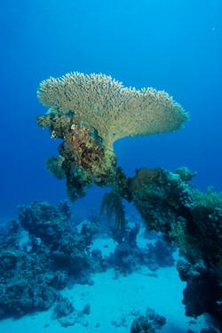 Морская тема_461