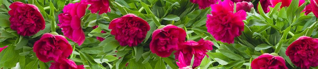 S_цветы_135