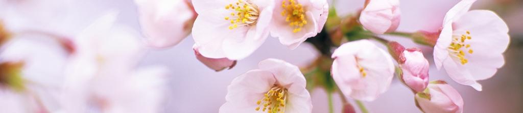 S_цветы_177