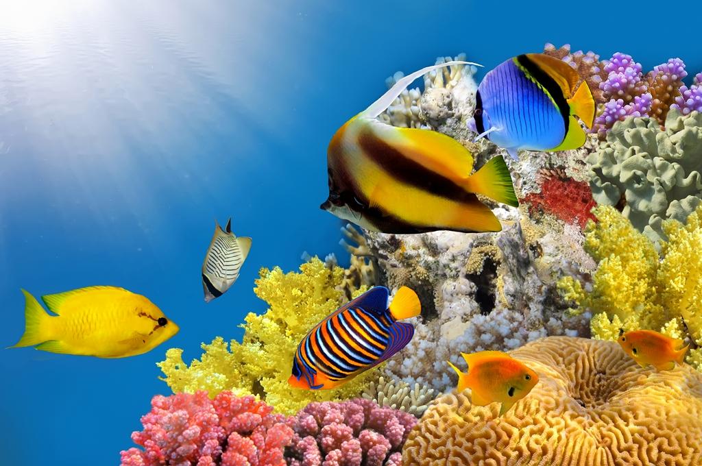 Морская тема_058