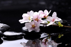 Цветы_145